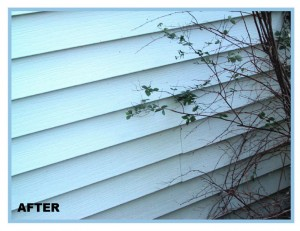 cleaning vinyl siding in madison